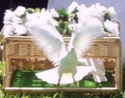 doves weddings Fort Myers