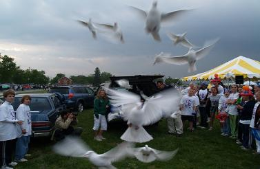 Lee County dove release